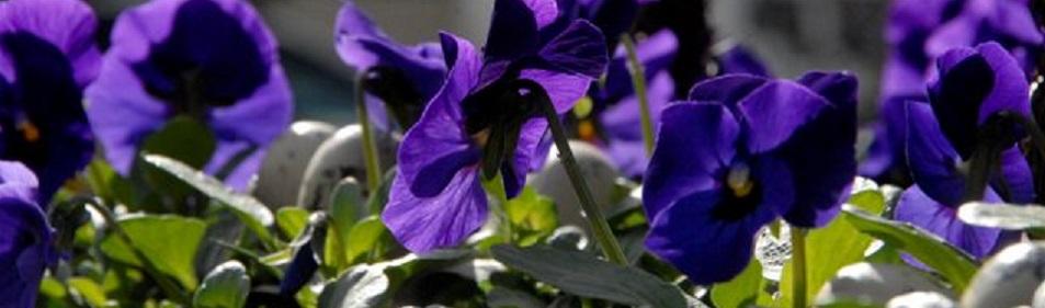 Hilbrands bloemen Westerbork